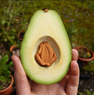 avocado stone in avocado